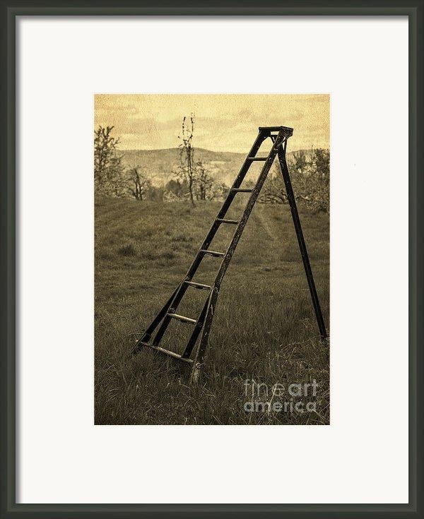 Orchard Ladder Framed Print By Edward Fielding