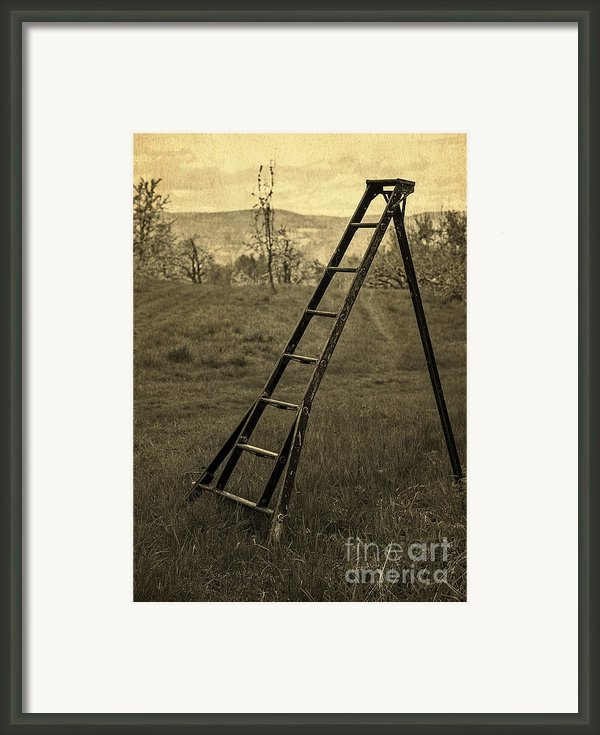 Orchard Ladder Framed Print By Edward Fielding