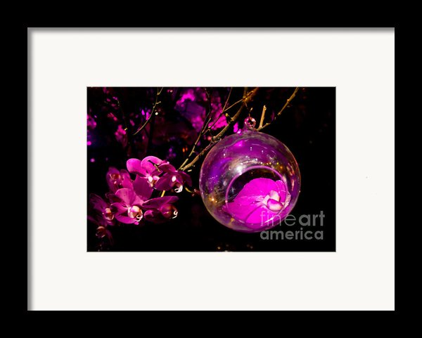 Orchid Ornament Framed Print By Nadya Ost