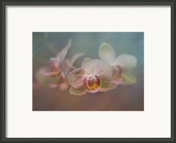 Orchids In The Mist Framed Print By John Kain