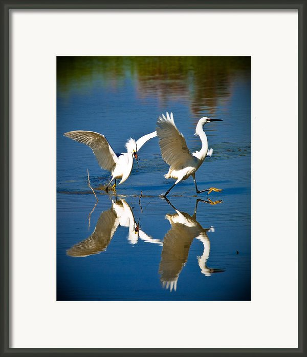 Out Of My Pond Framed Print By Elaine Snyder