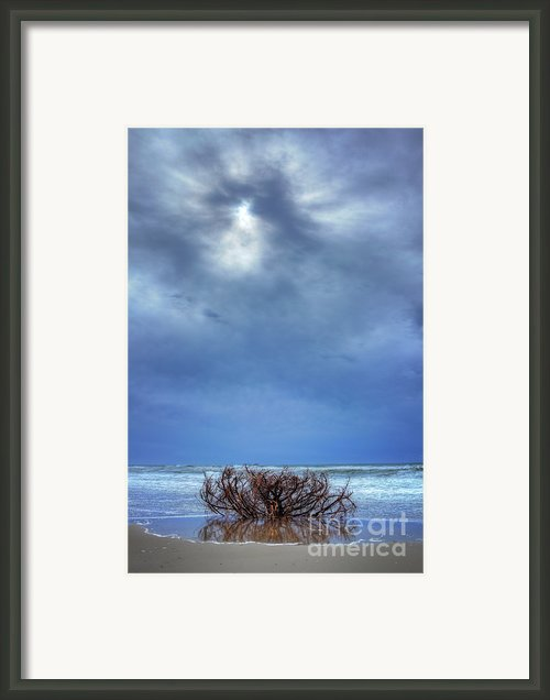 Outer Banks - Driftwood Bush On Beach In Surf I Framed Print By Dan Carmichael