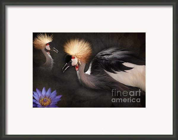 Painted Islands Of Summer Lilies Framed Print By Sharon Mau