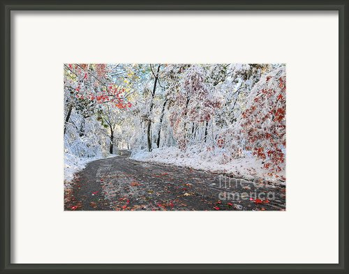 Painted Snow Framed Print By Catherine Reusch  Daley