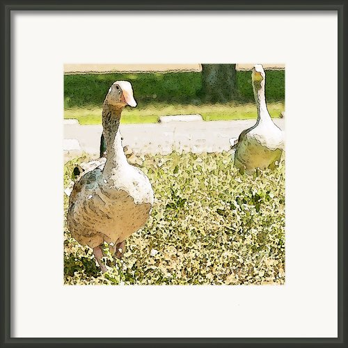 Pair Of Geese Framed Print By Author And Photographer Laura Wrede