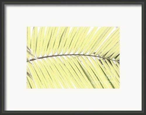 Palm Leaf Framed Print By Gaspar Avila