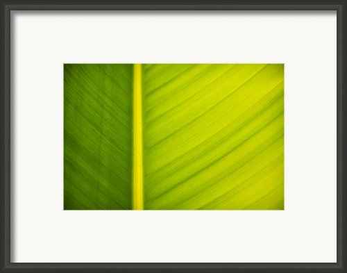 Palm Leaf Macro Abstract Framed Print By Adam Romanowicz