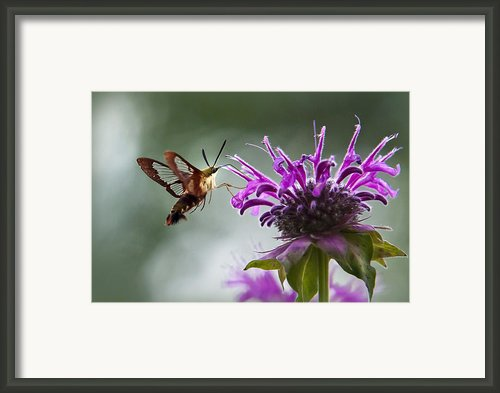 Passion Framed Print By Christina Rollo