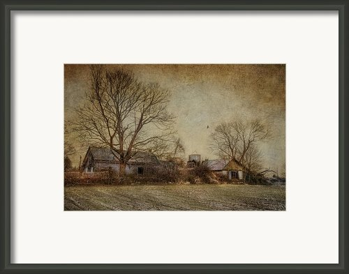 Past Prime Framed Print By Robin-lee Vieira
