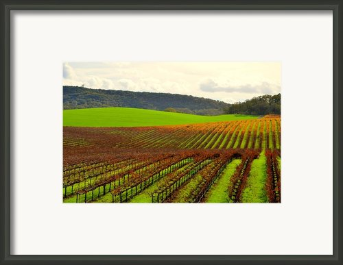 Pastoral Vineyards Of Asti Framed Print By Antonia Citrino