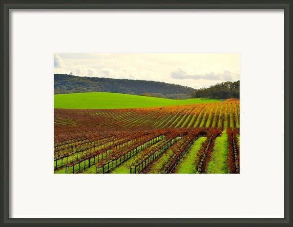 Pastoral Vineyards Of Asti Framed Print By Antonia Citrino