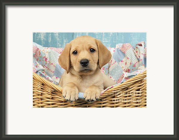 Patchwork Puppy Dp793 Framed Print By Greg Cuddiford