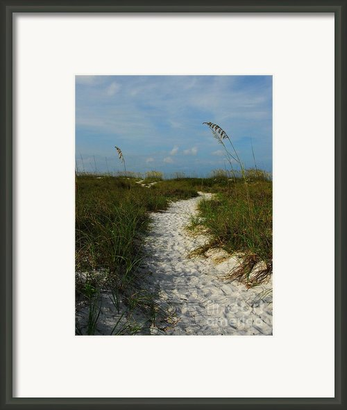 Pathway To The Sea Framed Print By Mel Steinhauer