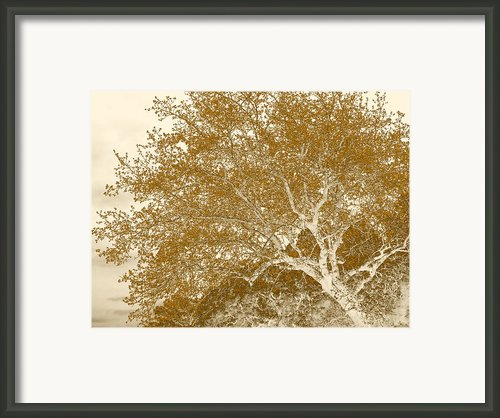 Patience Framed Print By Wendy J St Christopher
