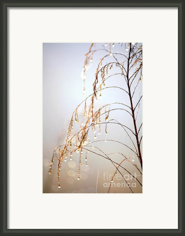 Peaceful Morning Framed Print By Carol Groenen