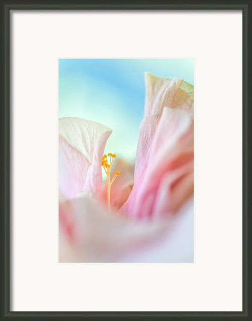 Peach Hibiscus. Macro Framed Print By Jenny Rainbow