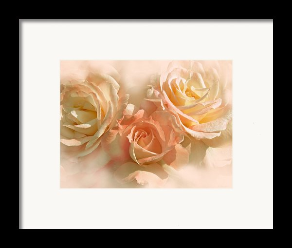 Peach Roses In The Mist Framed Print By Jennie Marie Schell