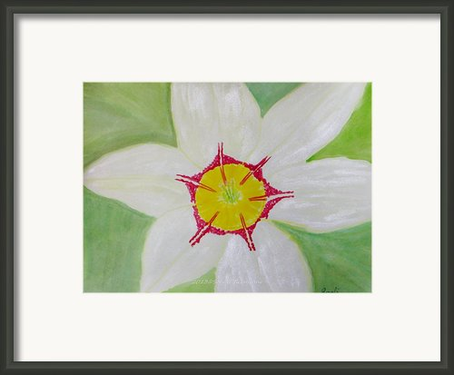 Pearl White Flower Framed Print By Sonali Gangane