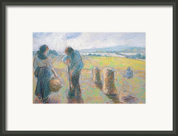 Peasants In The Fields Framed Print By Camille Pissarro