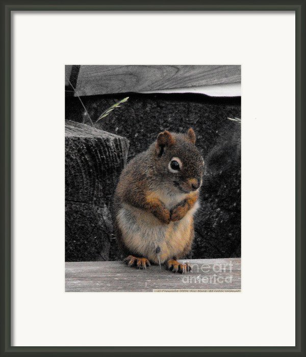 Peeing Red Squirrel Framed Print By Eric Menk