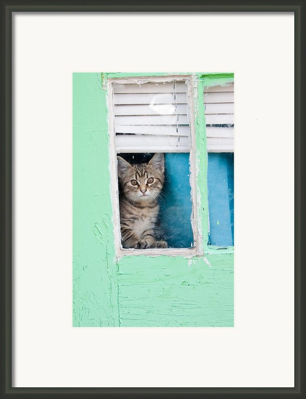 Peek-a-boo Framed Print By Jean Haynes