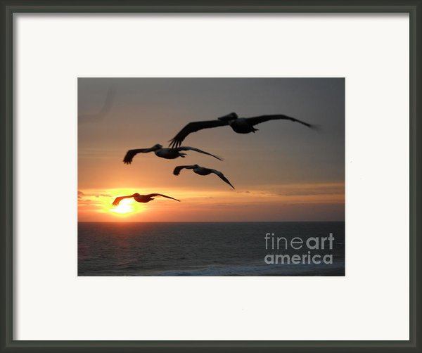 Pelican Sun Up Framed Print By Laurie D Lundquist
