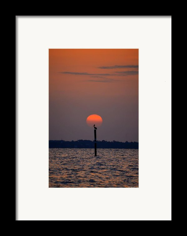 Pelican Sunrise Silhouette On Sound Framed Print By Jeff At Jsj Photography