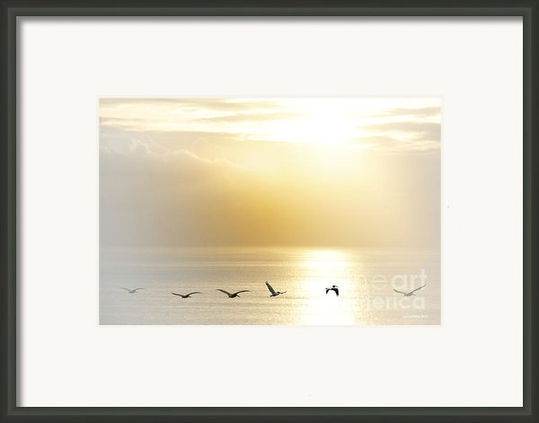 Pelicans Over Malibu Beach California Framed Print By Artist And Photographer Laura Wrede