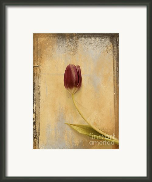 Penchant Naturel 03bt03c Framed Print By Variance Collections