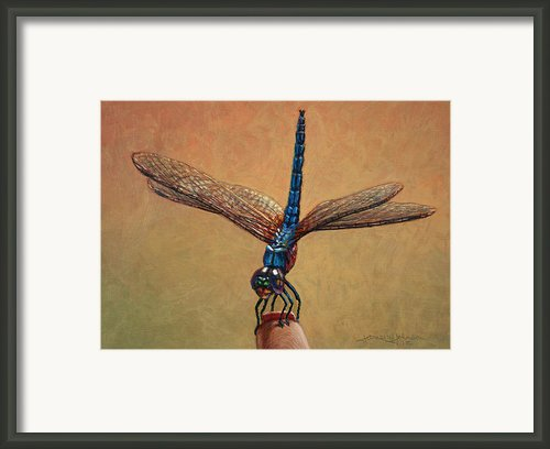 Pet Dragonfly Framed Print By James W Johnson