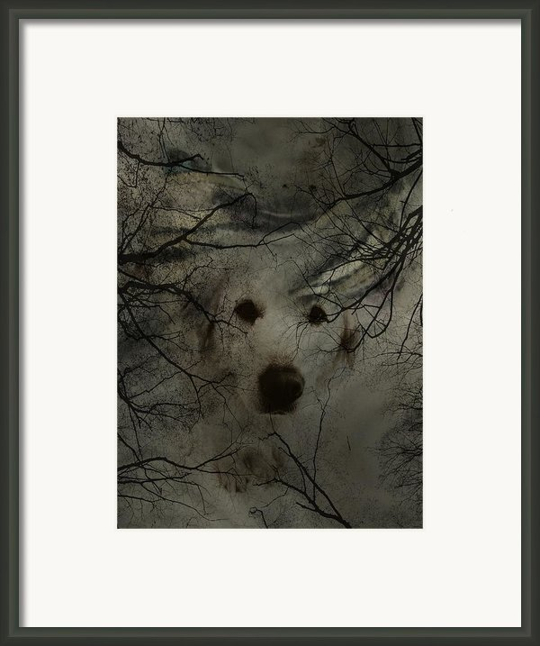 Phantom Dog Framed Print By Shirley Sirois