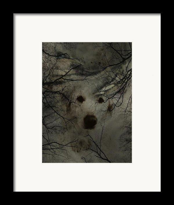 Phantom Dog Framed Print By Shirley Sirois