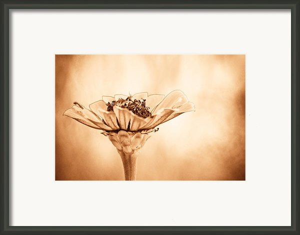 Phillies Need A Win Framed Print By Trish Tritz