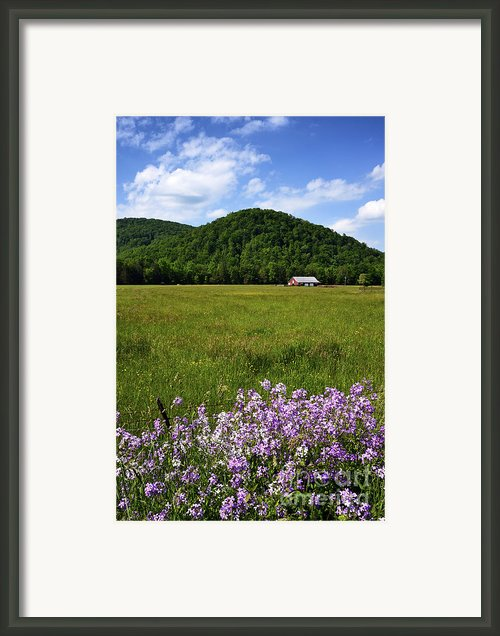 Phlox And Barn Framed Print By Thomas R Fletcher