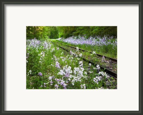 Phlox Tracks Framed Print By Bill  Wakeley