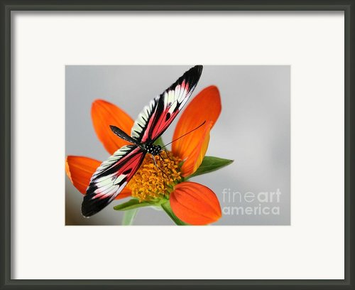 Piano Key Butterfly Up Close Framed Print By Sabrina L Ryan