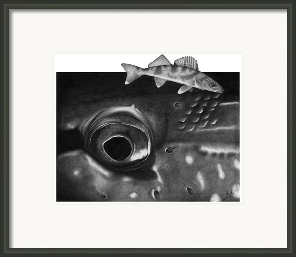 Pike Eye Framed Print By Nick Laferriere