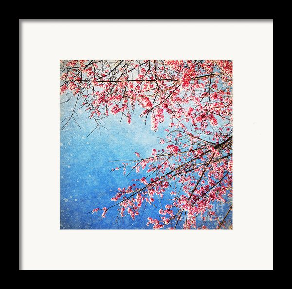 Pink Blossom Framed Print By Setsiri Silapasuwanchai