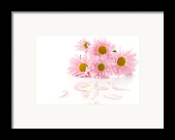 Pink Chrysanthemums Beautiful Framed Print By Boon Mee