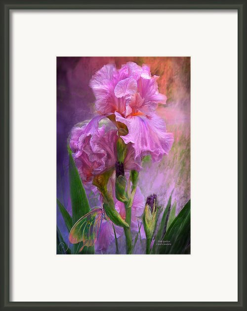 Pink Goddess Framed Print By Carol Cavalaris