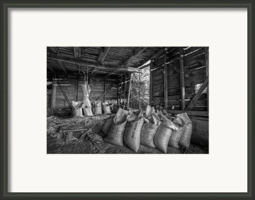 Pinto Beans Framed Print By Debra And Dave Vanderlaan