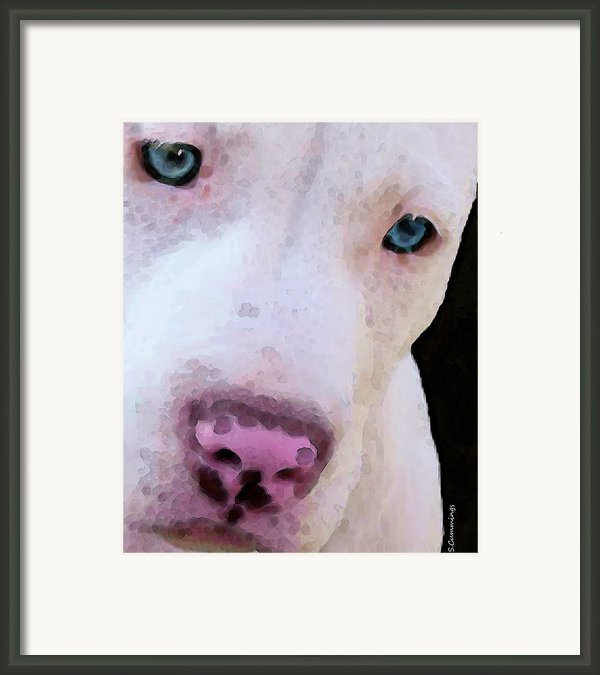Pit Bull Art - Not A Fighter Framed Print By Sharon Cummings