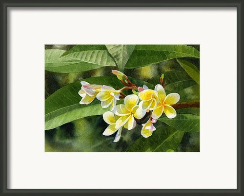 Plumeria Blossoms Framed Print By Sharon Freeman