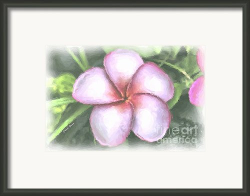 Plumeria Painting Framed Print By Cheryl Young