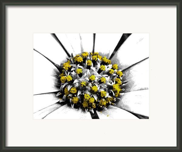 Pollen  Framed Print By Steve Taylor