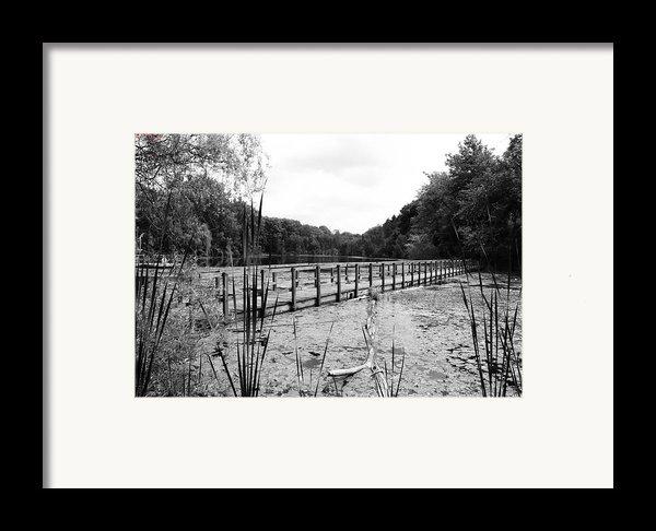 Pond Trail Adventures Framed Print By Jennifer L Washington