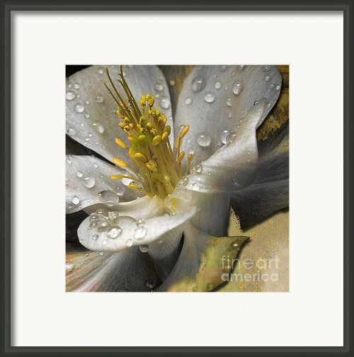 Pop Framed Print By Yanni Theodorou