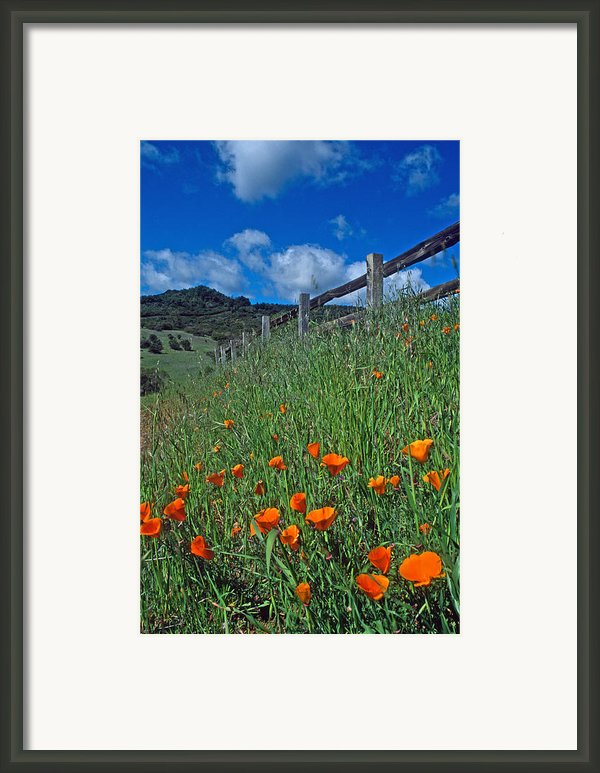 Poppies And The Fence Framed Print By Kathy Yates