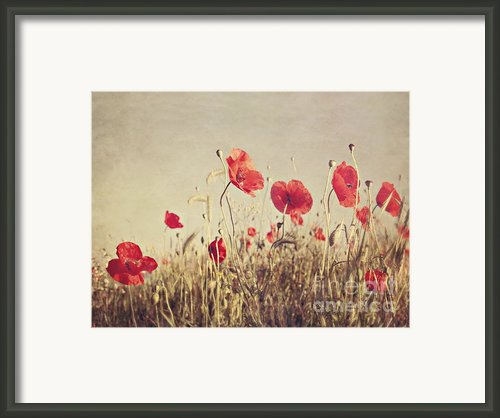 Poppies Framed Print By Diana Kraleva