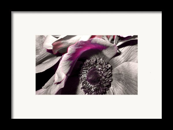 Poppy Eye Framed Print By Sharon Costa